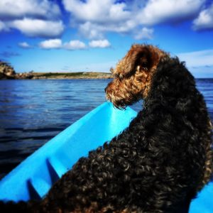 Terrier known as Brewery Dog on a blue Kayak